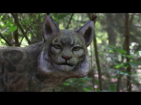 Заповедник Брянский Лес Прогулка по экологической тропе