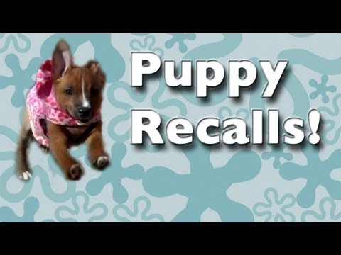 Teach ANY puppy to come when called! - come recall training, come recall fun and games!