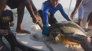 رصد مسار السلاحف البحرية ومصير الحياة على كوكبنا في المستقبل – science   24-5-2016