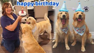 puppies-first-birthday-party-surprise