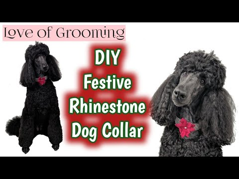 How to make a Rhinestone Collar for Dogs | Dog Grooming Accessories