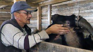 Napustio grad da formira životinjsku farmu