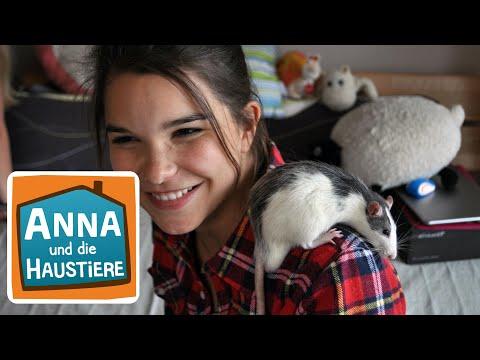 Farbratte | Information für Kinder | Anna und die Haustiere