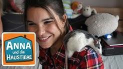 Farbratte   Information für Kinder   Anna und die Haustiere