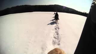 Ecurie des 4 Lacs,3 jours de randonnée à cheval dans le Jura.