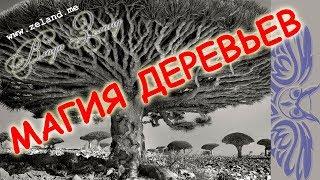 ИГГДРАСИЛЬ - Магия Деревьев. Гигантские. необычные деревья мира.