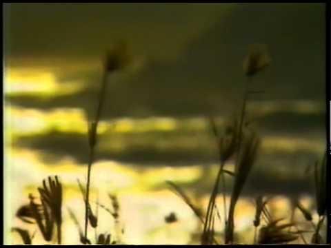 O Canto das Sereias ( REDE MANCHETE, 1990)