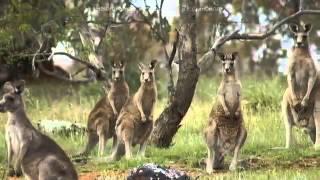 Достопримечательности Канберры Австралия(Канберра — столица Австралии. Город появился совершенно случайно, и если бы не было противостояния двух..., 2015-01-16T09:39:03.000Z)