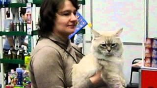 Выставка кошек «CATS-форум 2011» 12-13 ноября 2011 года