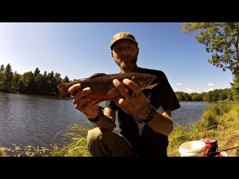 Ontario Brook Trout Fishing (stocked Back Lake )