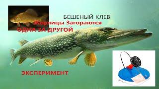 БЕШЕНЫЙ КЛЕВ Щуки на Жерлицы Зимняя Рыбалка 2021 Ловля Щуки на жерлицы