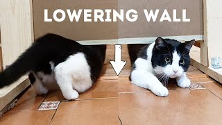 Go under the Lowering Wall. Cats = liquid???