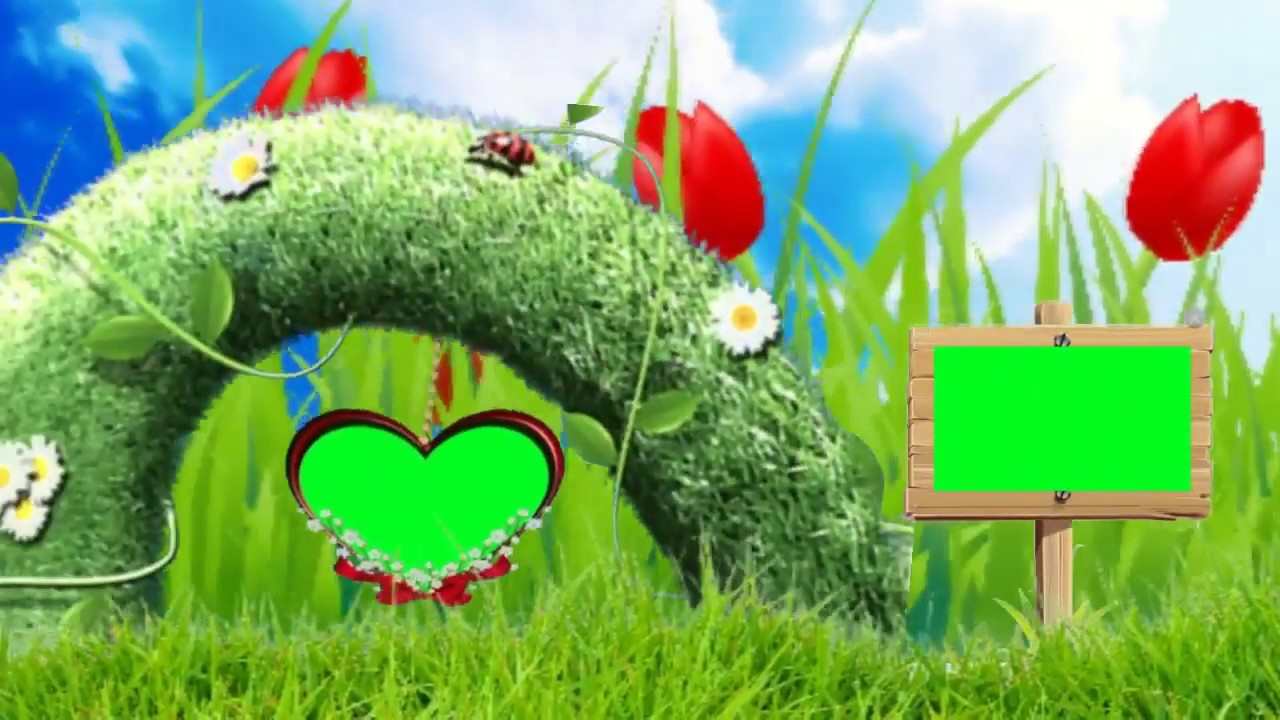 Screen New Green Wedding Background Video Effects Use Edius Software Free  Download 07