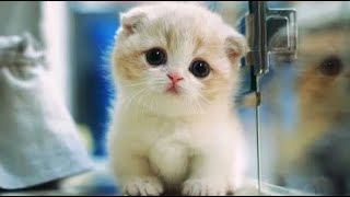 Cute and Funny Cats  - Cutest Cat Ever 2019