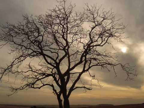 Benci Tapi Rindu - Saleem iklim