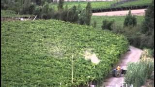 MBC 수입 농산물과 칠레 포도