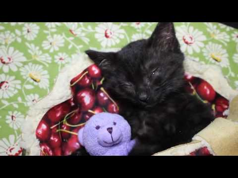 Funny cats,  funny dogs, cute animals - Animal Compilation June 2016 | Funny Berry Animals #73