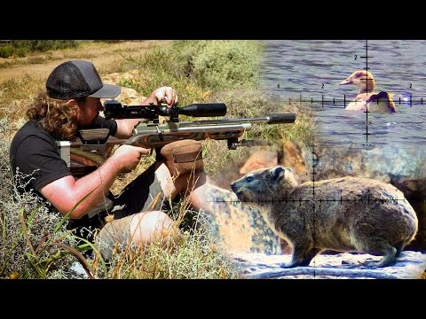 Hyrax & Goose Hunt with PCP Airguns – A Busy Day in the Mountains!
