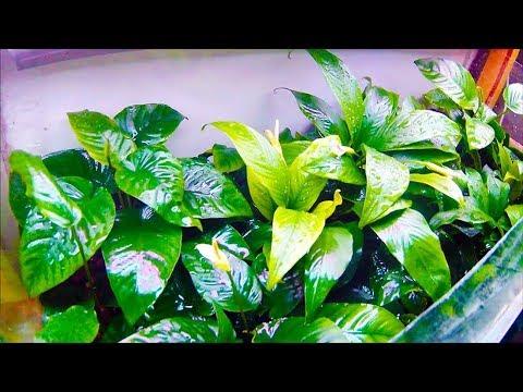 10 быстрорастущих комнатных растений. Растем быстро – выглядим красиво!