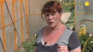 Выгода ранней посадки томатов в теплице