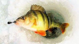 С этой мормышкой и прикормкой собрал всю рыбу Ни минуты покоя Зимняя рыбалка Ловля окуня