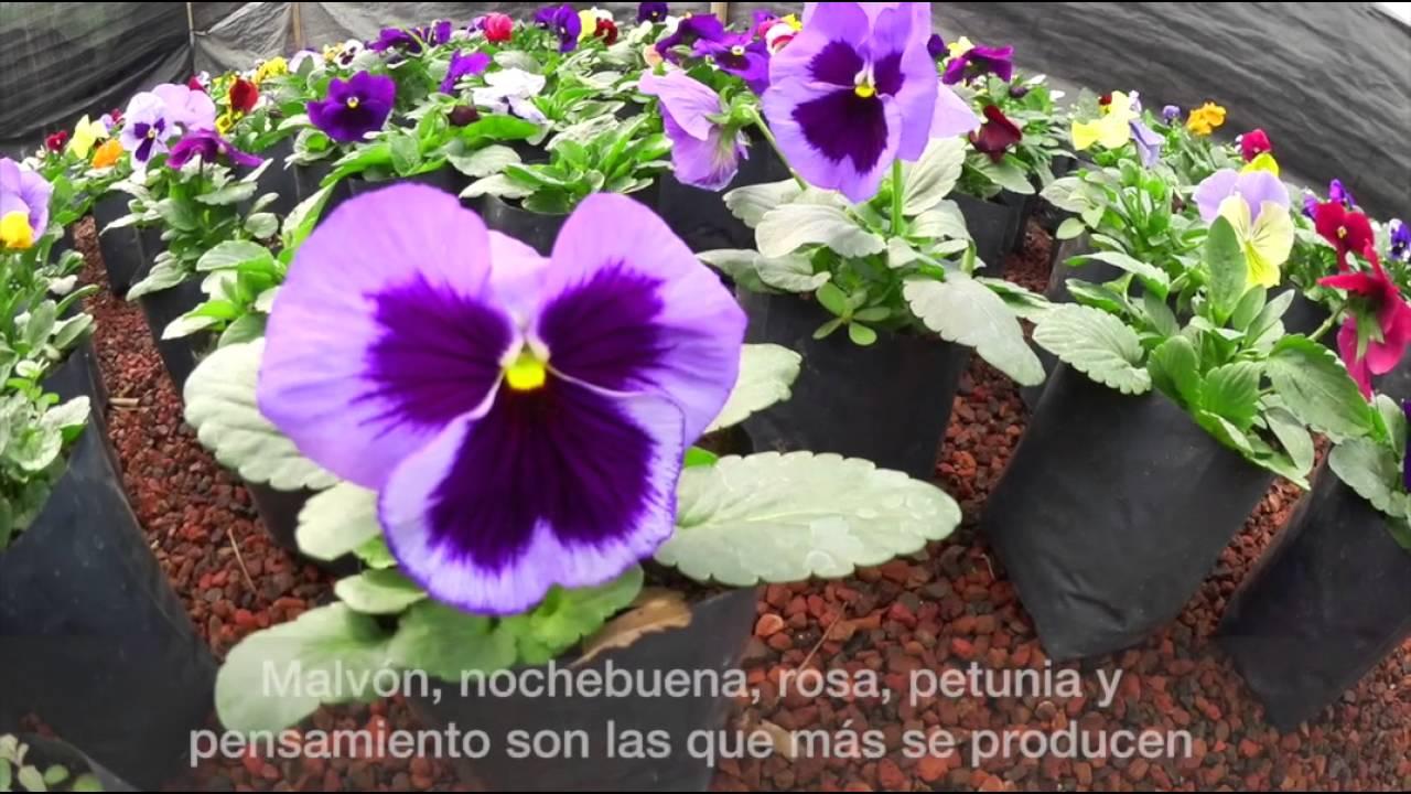 Plantas de ornato en la cdmx youtube for 10 plantas de ornato