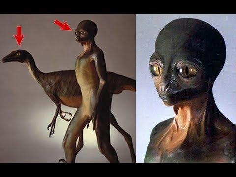 ¿Qué pasaría si los dinosaurios no se hubieran extinguido? - 동영상