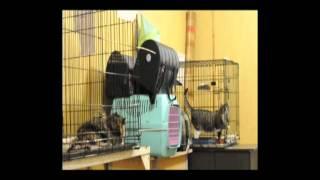 Кошки - приют в Санкт Петербурге