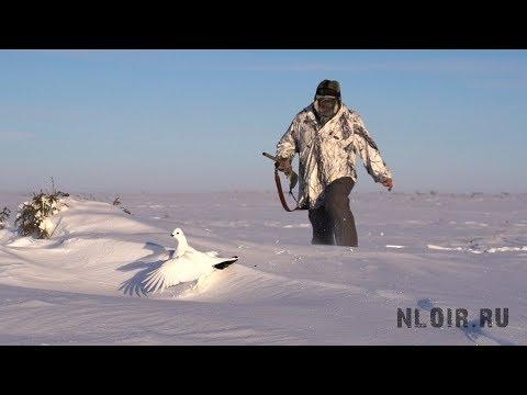 Охота на севере.Белая Куропатка.Нао.Россия.