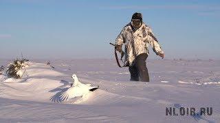 Охота на белую куропатку на севере России