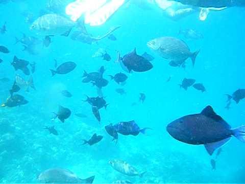 Sun Islands Maldives 2009 - Underwater