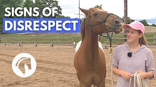 SIGNS A HORSE DOESN'T RESPECT YOU | Horse Behavior Guide