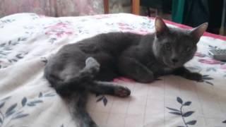 Злобная кошка
