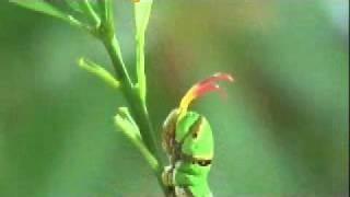 作者:林美蓉劉仕偉透過顯微鏡由微觀的角度去觀察無尾鳳蝶的幼蟲在卵內...