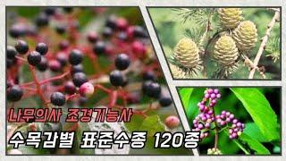 조경기능사 수목감별 표준수종 120종 영상