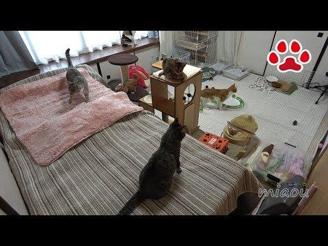 仔猫部屋で猫達が過ごした日【瀬戸の猫部屋日記】