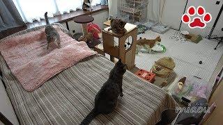 猫部屋のクーラー取り替え工事のために、工事が終わるまで仔猫部屋に猫...
