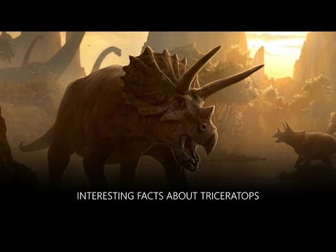 Interesting Facts about Triceratops