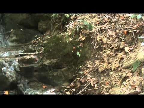 Searching For Gemstone Mine In The Appalachian Mountains