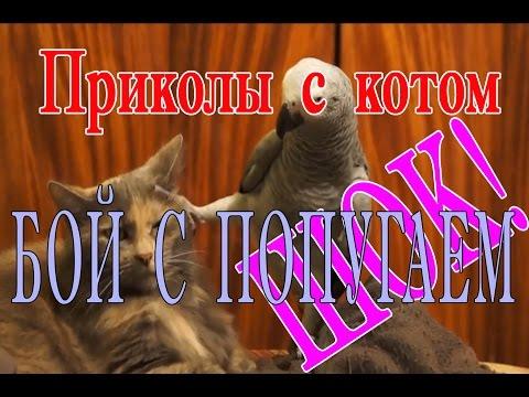 :: Кот и попугай. Очень смешно смотреть!
