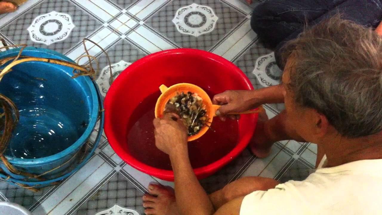 #1 Quá trình vắt sáp ong khai thác từ rừng @MẬT ONG RỪNG TRÀ MY