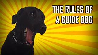 The Rules of a Guide Dog | Lucy Edwards