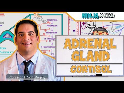 Endocrinology | Adrenal