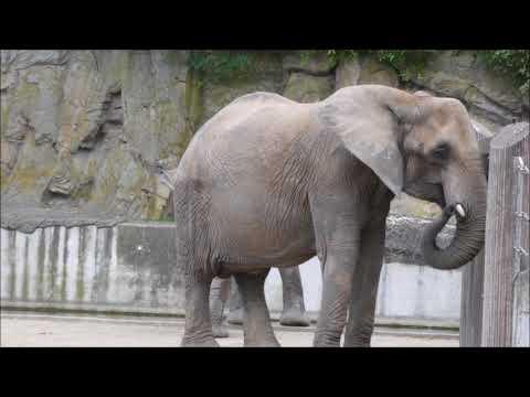 Tiergarten Schoenbrunn / Vienna Zoo
