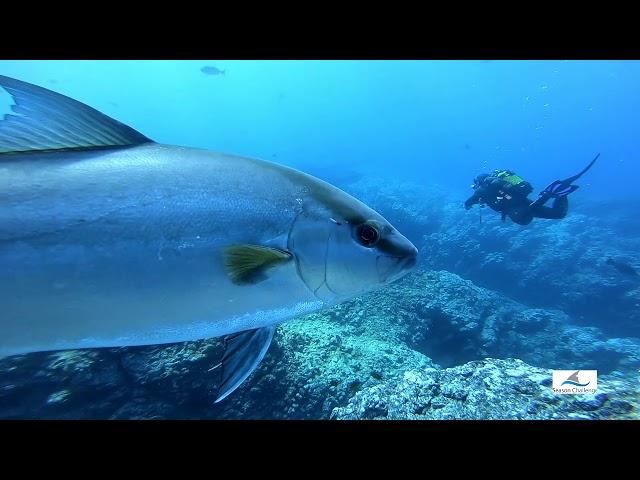 Off Shore by Season Challenge Azores Dive Center