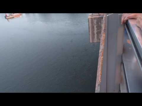Austin Texas bats under Congress St bridge