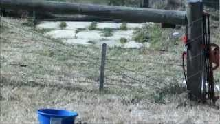 Temporary Electric Smart Fence To Contain Cattle