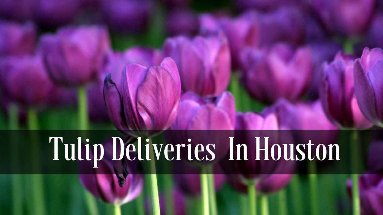 Flower Delivery Houston Texas Pink Tulips For Delivery Youtube