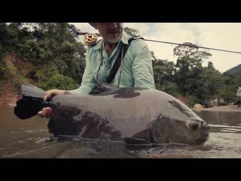 Fly Fishing For Pacú In The Bolivian Amazon