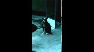Собака которая слушает намаз
